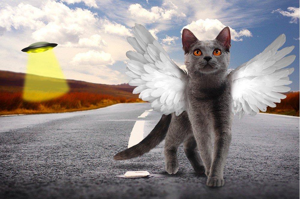 gatto con le ali