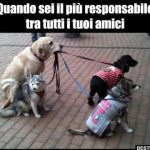 cane responsabile