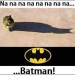 gatto-batman